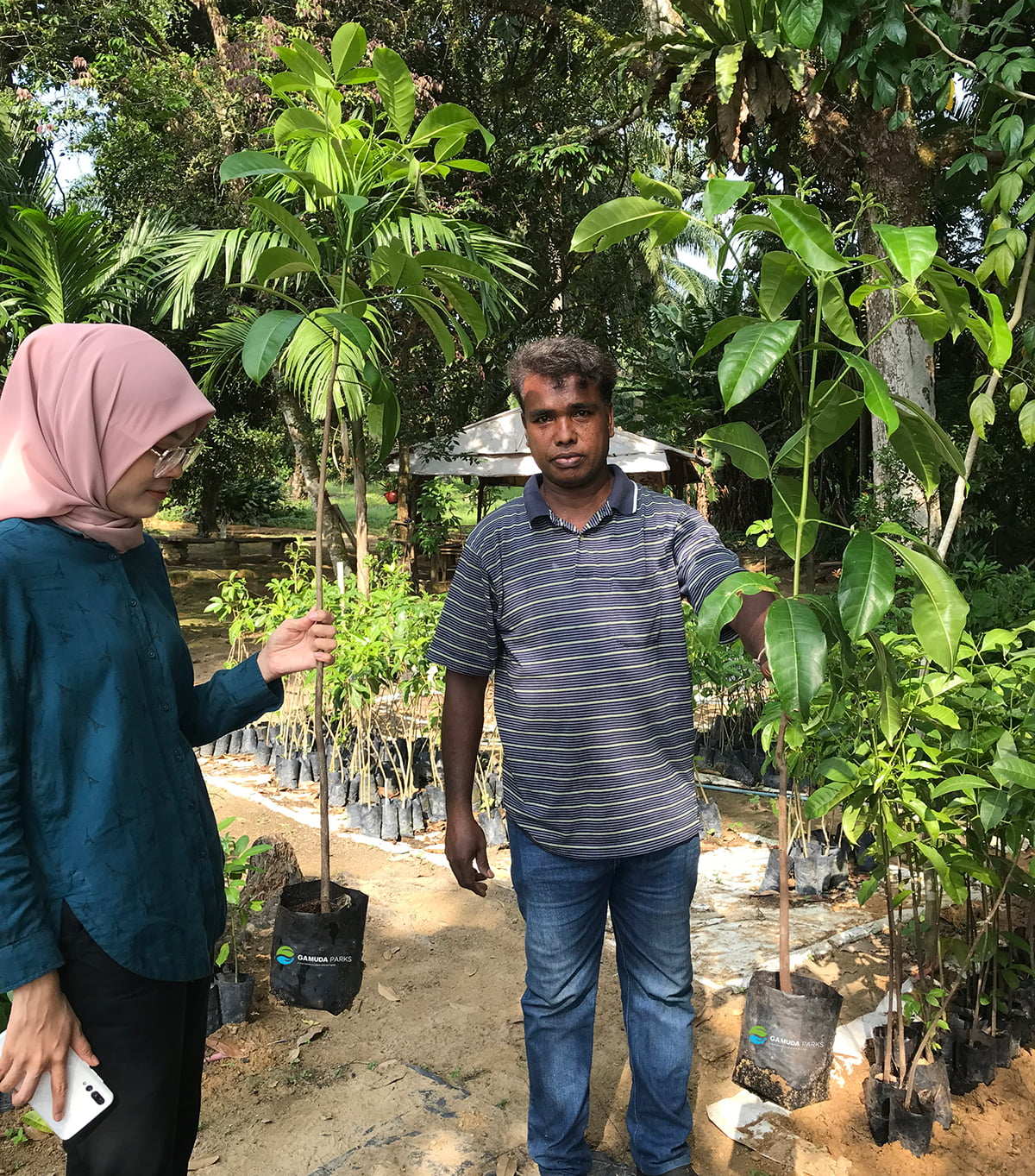 The establishment of an indigenous nursery in Pulau Kempas helps generate sustainable income for the Temuan community.