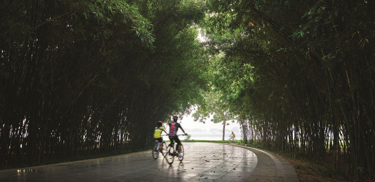 Yen So Park is filled with mature trees, comfortable for biking and outdoor activities.