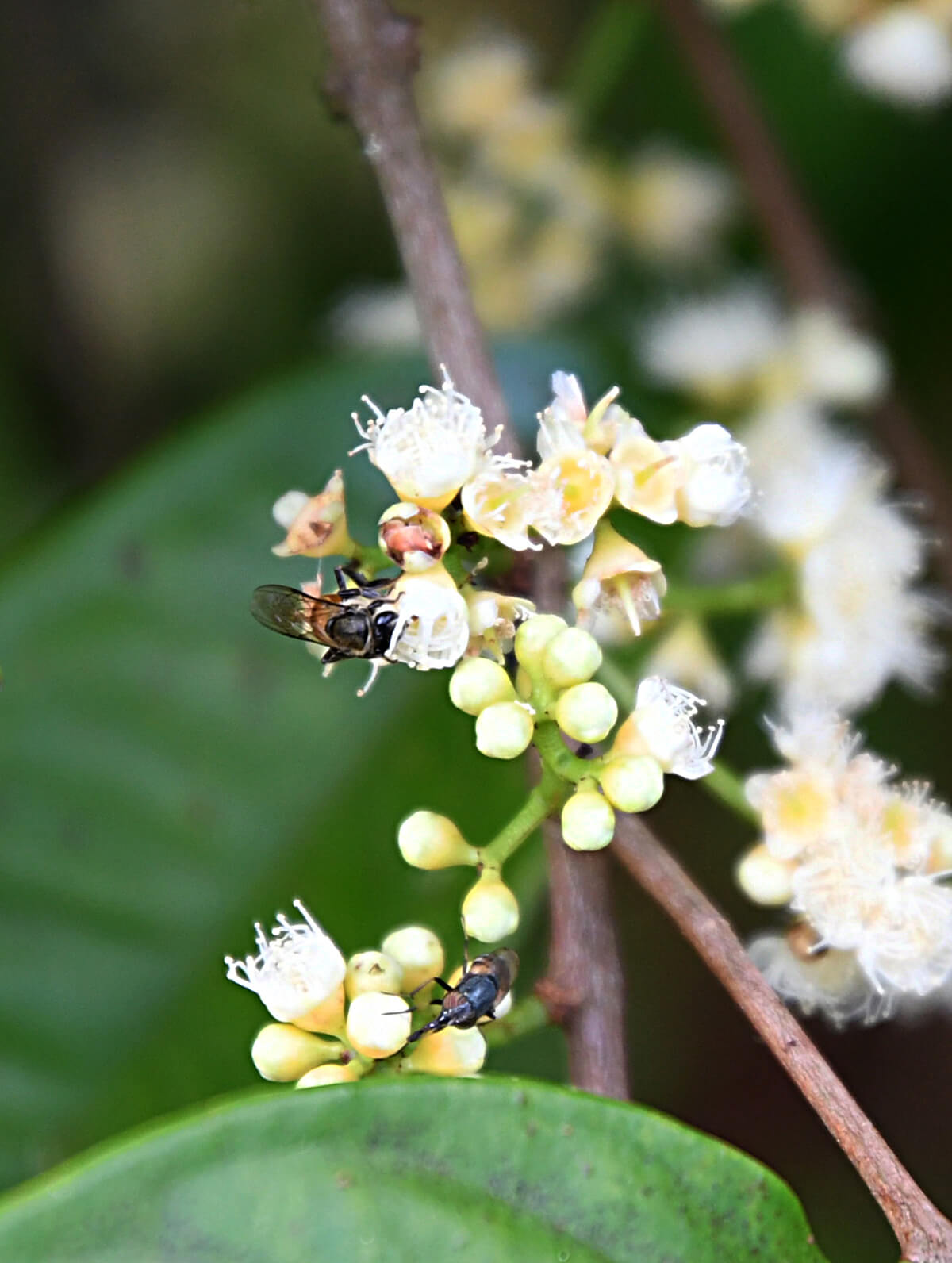 Stingless bees were introduced to Horizon Hills.