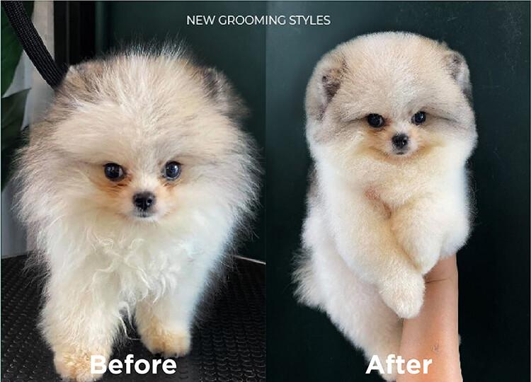 FURIIStyle Pet Grooming