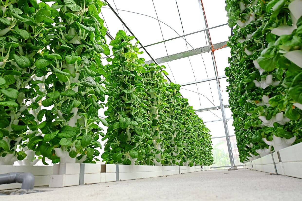 Vertical farming systems can maximise use of space in an urban context.