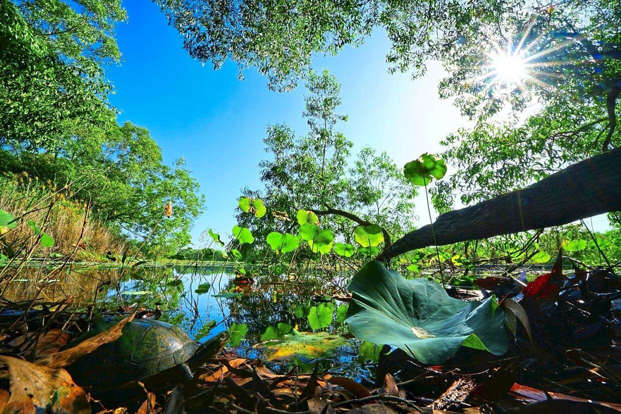 Gamuda Parks aims to create a space where township residents and nature can co-exist harmoniously in the same habitat. Actual photo: Paya Indah Discovery Wetlands