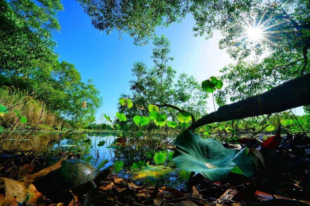 Paya Indah Discovery Wetlands. Gamuda Parks aims to preserve Malaysia's natural heritage. (Actual photo)