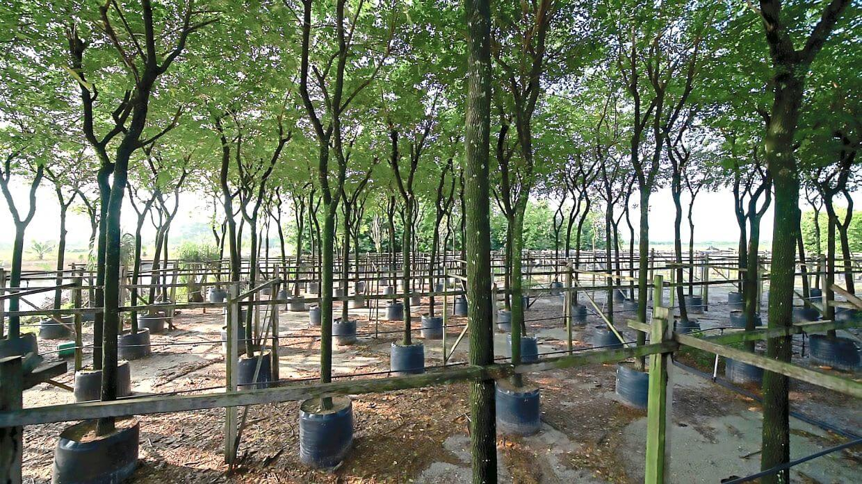 Gamuda Parks uses advanced tree growing methods in holding nurseries on sites such as Gamuda Gardens and Gamuda Cove, where trees are grown until ready for transplanting.