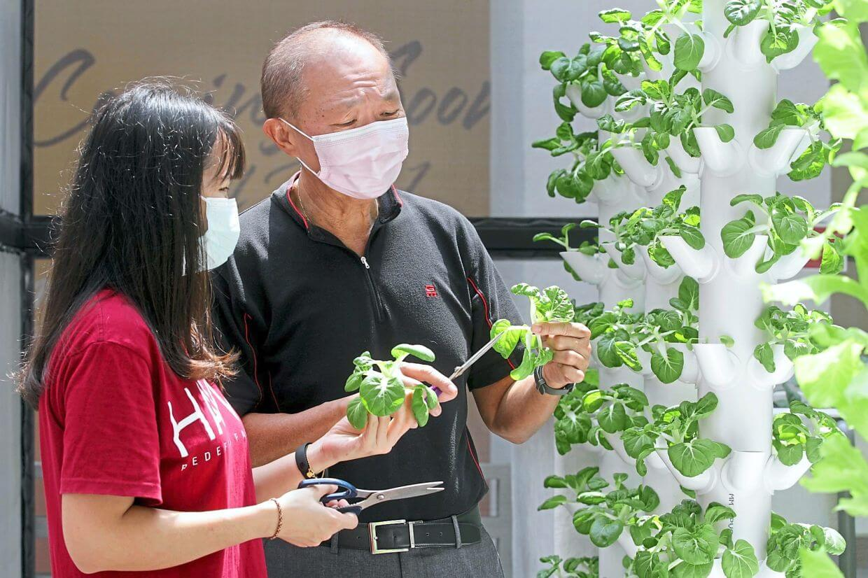Tan (right) and Teoh checking vegetables at Farm by the Quay.